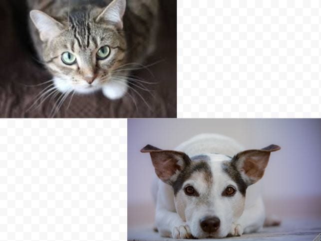 dog person or cat person – Cat Chat
